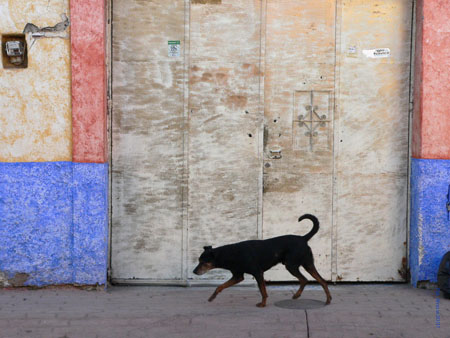 Tonalá dog and pastel walls, emblematic of Mexico. Photo by Pat Arnow
